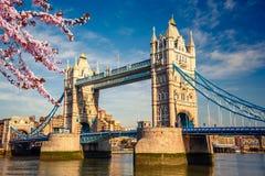 Tower bridge in London. Tower bridge with cherry blossom, London Stock Photos
