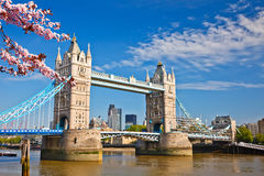 Tower bridge in London at spring Stock Photography
