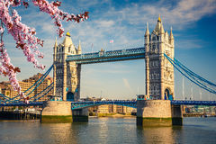 Tower bridge in London at spring Royalty Free Stock Photography