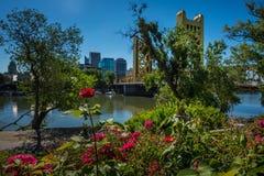 Tower Bridge Sacramento California. Beautiful Roses and Tower Bridge Sacramento California Sunny Day royalty free stock photography