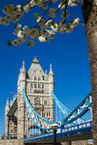 Tower Bridge in the spring Stock Photo