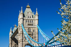 Tower Bridge in the spring Royalty Free Stock Photography