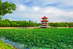 The tower building in the lotus pool. The photo was taken in Tieren park Daqing city,China Royalty Free Stock Photos