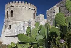 Tower and cactus Stock Photos