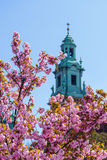 Tower of the Cathedral of Wawel with pink blossoms. Stock Photography