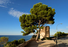 Tower at the Coastline, Miami Platja, Catalunya, Spain. Mediterranean coastline, pine tree, tower, Miami Platja Stock Photo