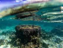 Tower of corals of polynesia cook island underwater stock image