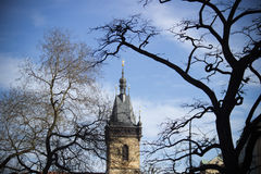 The tower is covered by the branches Royalty Free Stock Photography