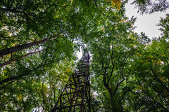 Tower in forest Royalty Free Stock Image