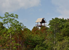 Tower forest - Tree house Royalty Free Stock Images