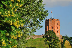 Tower of Gediminas. Vilnius, Tower of Gediminas, symbol of Vilnius. Summer royalty free stock photos
