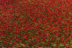 Tower of London 12 Nov 14. Ceramic poppies installation by Paul Royalty Free Stock Photos