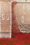 Tower of London 12 Nov 14. Ceramic poppies installation by Paul Stock Photos