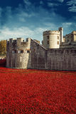 Tower of London 12 Nov 14. Ceramic poppies installation Royalty Free Stock Photography