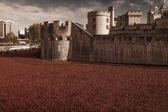 Tower of London 12 Nov 14. Ceramic poppies installation Stock Photography