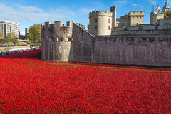 Tower of London 12 November 14. Ceramic poppies installation by Stock Image