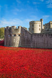 Tower of London 12 November 14. Ceramic poppies installation by Stock Photos