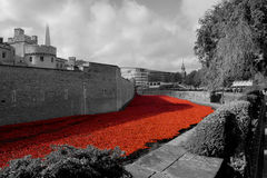 Tower of London. A picture of the beautiful 888,246 ceramic poppies laid across the moat in front of the Tower of London to represent the servicemen who died in Stock Photo