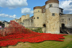 Tower of London Poppies Royalty Free Stock Photos