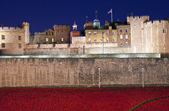 Tower of London and Poppies at Dusk Royalty Free Stock Photography