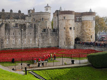 Tower of London Poppies and Volunteers Royalty Free Stock Photo