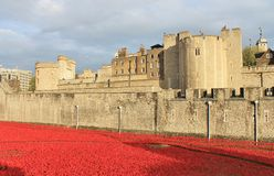 Tower of London with Poppies Stock Images