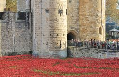 Tower of London with Poppies Stock Photos