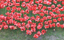Tower of London with Poppies Royalty Free Stock Image