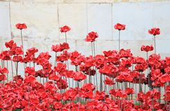 Tower of London with Poppies Stock Image
