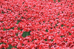 Tower of London with Poppies Royalty Free Stock Photography