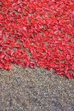 Tower of London with Poppies. London, United Kingdom - 28th September 2014: Almost 900,000 ceramic poppies are installed at The Tower of London to commemorate Stock Photography