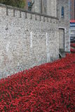 Tower of London with Poppies Royalty Free Stock Photos
