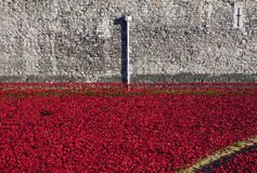 Tower of London and Poppies Stock Images