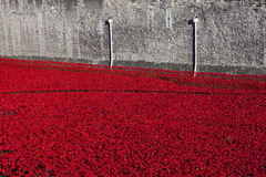 Tower of London and Poppies Royalty Free Stock Photo