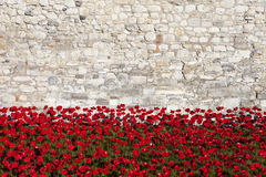 Tower of London and Poppies Stock Photo