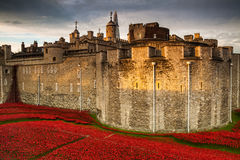Tower of London Poppy display WW1 Stock Photo