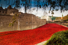 Tower of London Poppy display WW1 Royalty Free Stock Image