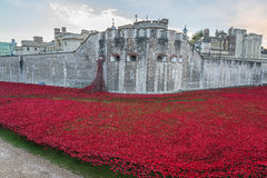 Tower of London red poppies Stock Photo