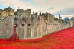 Tower of London with sea of Red Poppies to remember the fallen soldiers of WWI Stock Photo