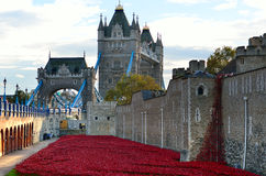 Tower of London with sea of Red Poppies to remember the fallen soldiers of WWI - 30th August 2014 - London, UK Royalty Free Stock Images