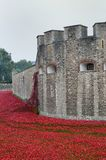 TOWER of  LONDON UK  Remembrance poppies Royalty Free Stock Image