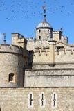 Tower of London. United Kingdom. Black ominous birds in the sky royalty free stock photo