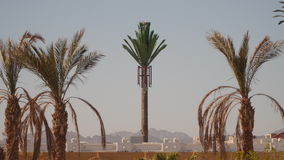 Tower mobile antennae as palm stock video