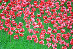 Tower poppies close up Royalty Free Stock Photography