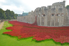 Tower poppies Stock Photo
