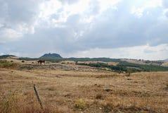 Radicofani and two horses stock photos
