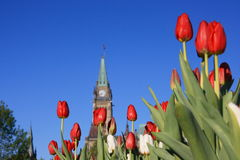Tower with Red & White Tulips Royalty Free Stock Image