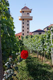 Tower Rose and Vineyards Bento Goncalves Royalty Free Stock Photos