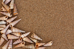 Tower Shell frame. Frame made from Tower Shells on the beach Royalty Free Stock Photography