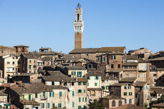 Tower of Siena town hall Royalty Free Stock Image